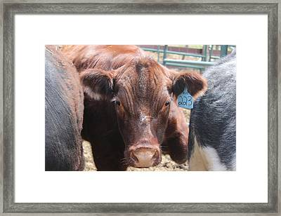 Stuck In The Middle Framed Print by Tiffany Erdman