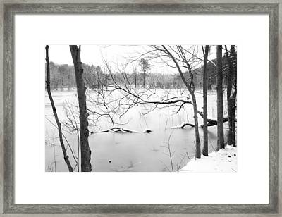 Stuck In The Middle With You Framed Print by Regina  Williams