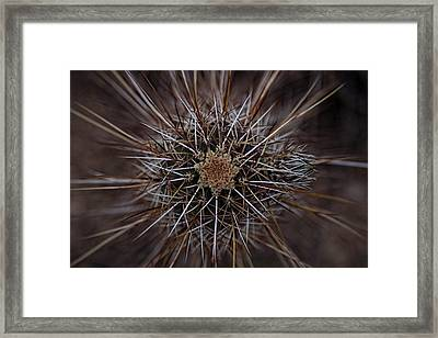 Stuck Up Framed Print