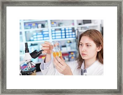 Student Examining Egg Yolk In Lab Framed Print