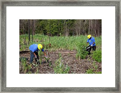 Students Removing Invasive Plants Framed Print by Jim West