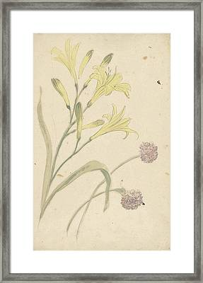 Studies Flower Of A Yellow Lily And A Blooming Onion Framed Print by Quint Lox