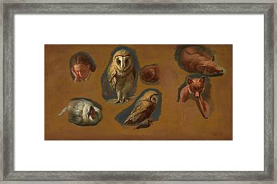 Studies Of A Fox, A Barn Owl, A Peahen, And The Head Framed Print by Litz Collection