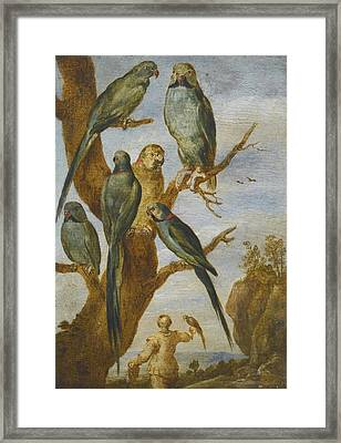 Studies Of Birds Framed Print by Celestial Images