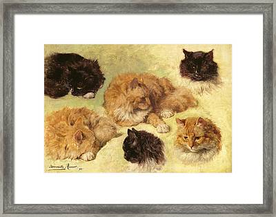 Studies Of Cats, 1895 Framed Print