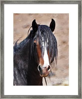 Studley Framed Print by Lula Adams