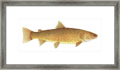 Framed Print featuring the painting Study Of A Bull Trout by Thom Glace