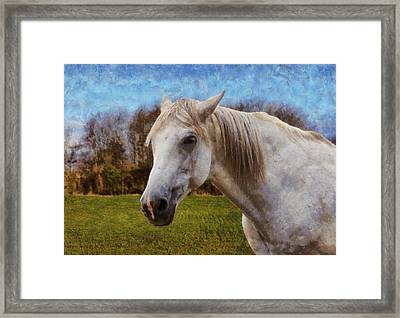 Study Of A Horse Framed Print