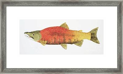 Framed Print featuring the painting Study Of A Male Kokanee Salmon In Spawning Brilliance by Thom Glace