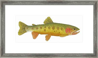 Framed Print featuring the painting Study Of A Rio Grande Cutthroat Trout by Thom Glace