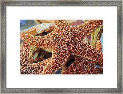 Study Of A Starfish Framed Print