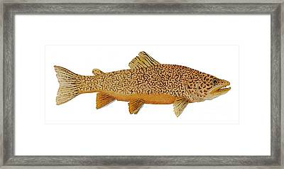 Framed Print featuring the painting Study Of A Tiger Trout by Thom Glace