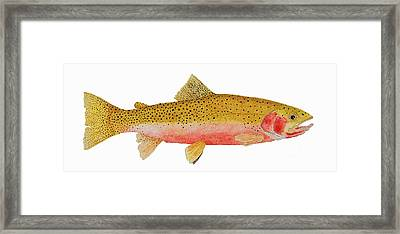 Framed Print featuring the painting Study Of A Westslope Cutthroat Trout by Thom Glace