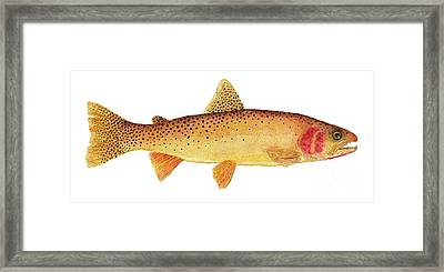 Framed Print featuring the painting Study Of A Yellowstone Cutthroat Trout by Thom Glace