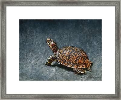 Study Of An Eastern Box Turtle Framed Print