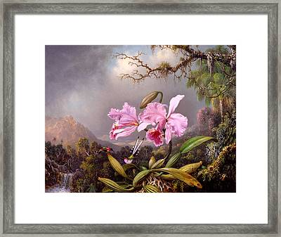 Study Of An Orchid Framed Print