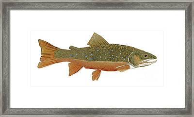 Framed Print featuring the painting Study Of An Wild Eastern Brook Trout  by Thom Glace