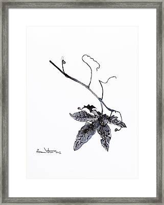 Study Of Leaf In Ink Framed Print