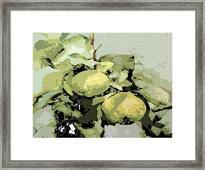 Study Of Quinces Framed Print by Manik