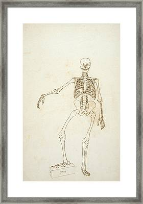 Study Of The Human Figure, Anterior View, From A Comparative Anatomical Exposition Of The Structure Framed Print