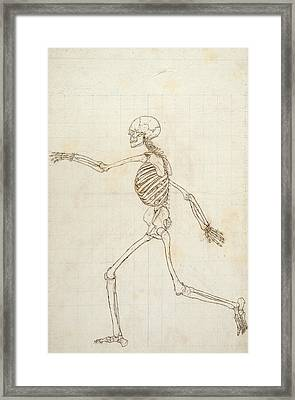 Study Of The Human Figure, Lateral View, From A Comparative Anatomical Exposition Of The Structure Framed Print
