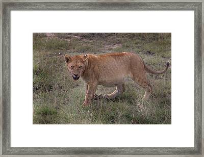 Framed Print featuring the photograph Stuffed And Sleepy by Joseph G Holland