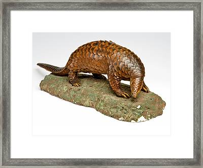 Stuffed Pangolin Framed Print