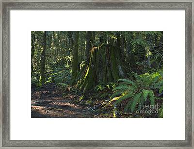 Stump And Fern Framed Print by Sharon Talson
