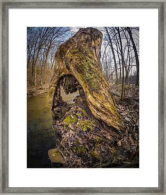 Stump Framed Print by Carl Engman