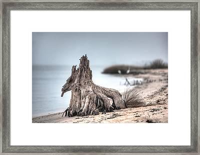 Stump Dragon Framed Print by Joan McCool