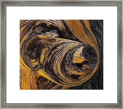 Stump Lump And Bump Framed Print
