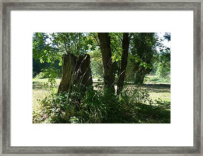 Framed Print featuring the photograph Stumped by Sadie Reneau