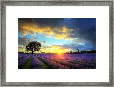 Stunning Atmospheric Sunset Over Vibrant Lavender Fields Framed Print by Matthew Gibson