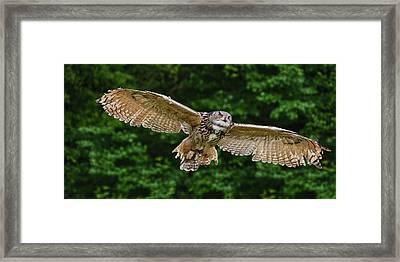 Stunning European Eagle Owl In Flight Framed Print by Matthew Gibson