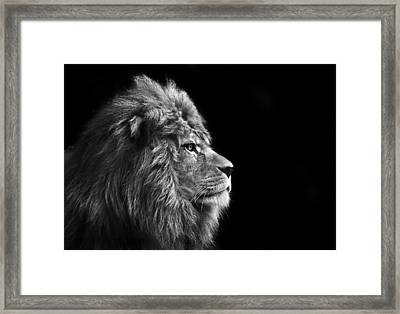 Stunning Facial Portrait Of Male Lion On Black Background In Bla Framed Print by Matthew Gibson