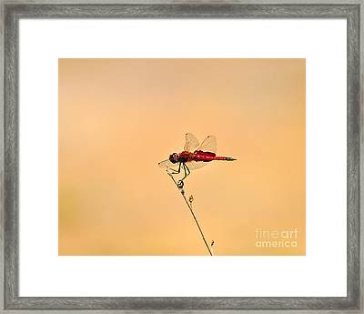 Stunning Saddlebags Framed Print by Al Powell Photography USA