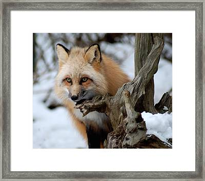 Stunning Sierra Framed Print by Richard Bryce and Family