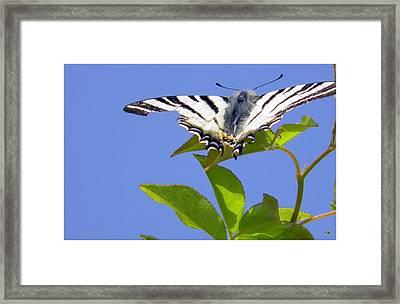 Stupenda Framed Print by Halina Nechyporuk