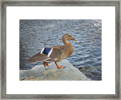 Stylin Duck Framed Print