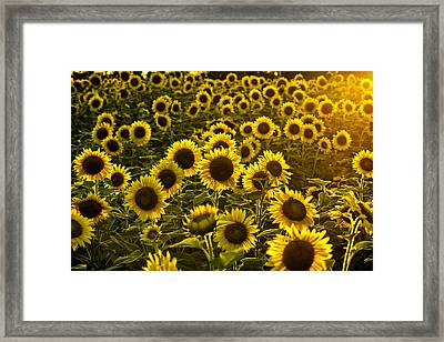 Stylin With A Touch Of Flare Framed Print by Edward Kreis