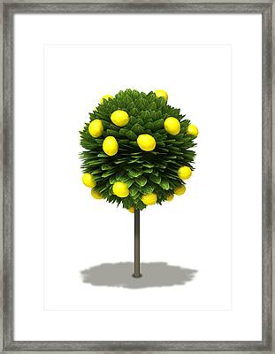 Stylized Lemon Tree Framed Print