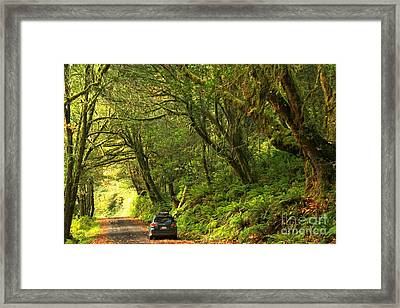 Subaru In The Rainforest Framed Print
