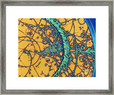 Subatomic Particle Tracks Framed Print by Cern