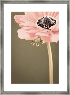 Subdued Anemone Framed Print