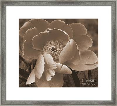 Subdued  Framed Print by Eunice Miller