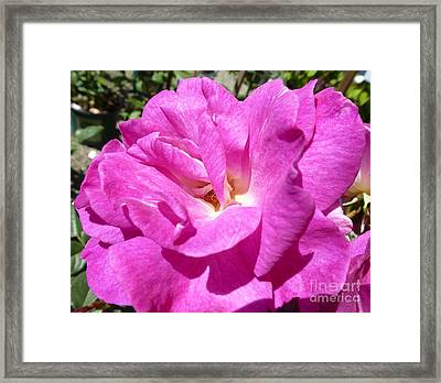 Sublime Tenderness  Framed Print by Anat Gerards