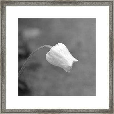 Submission Framed Print by Mary Zeman