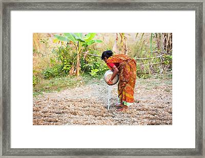 Subsistence Farmer Watering Vegetables Framed Print by Ashley Cooper