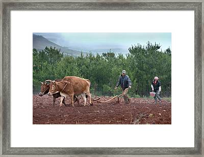 Subsistence Farmers Ploughing A Field Framed Print