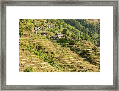 Subsistence Farming Framed Print by Ashley Cooper